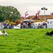 Rounding Up The Geese (Sheepdog Demonstration)