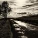 L'arbre solitaire by laroque