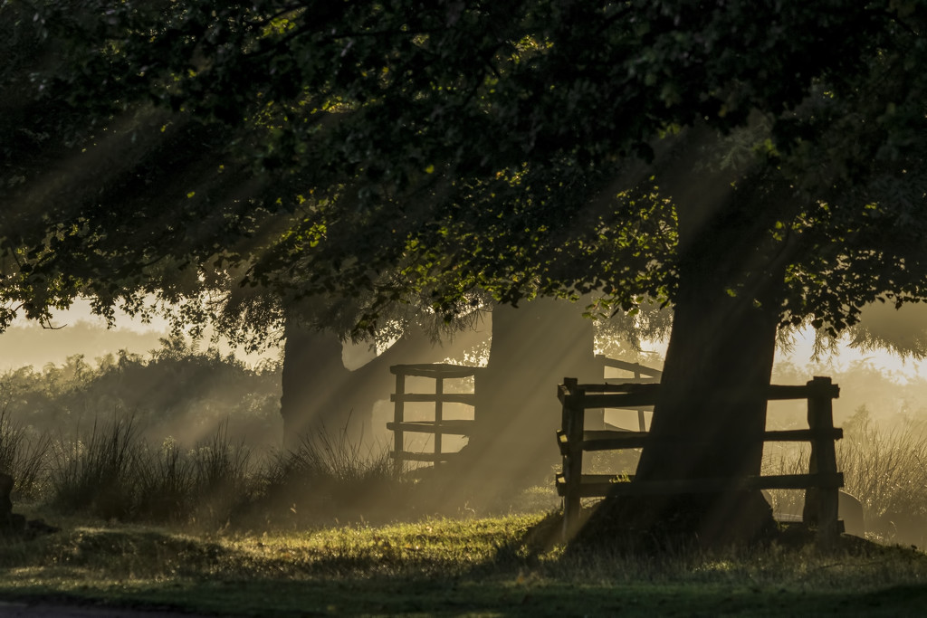 Early morning sunshine in the mist by shepherdmanswife