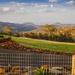Preston Peaks Winery by purdey
