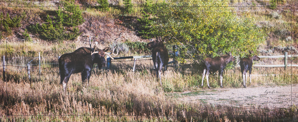 Mr. & Mrs. Moose and the Kids by lyndemc