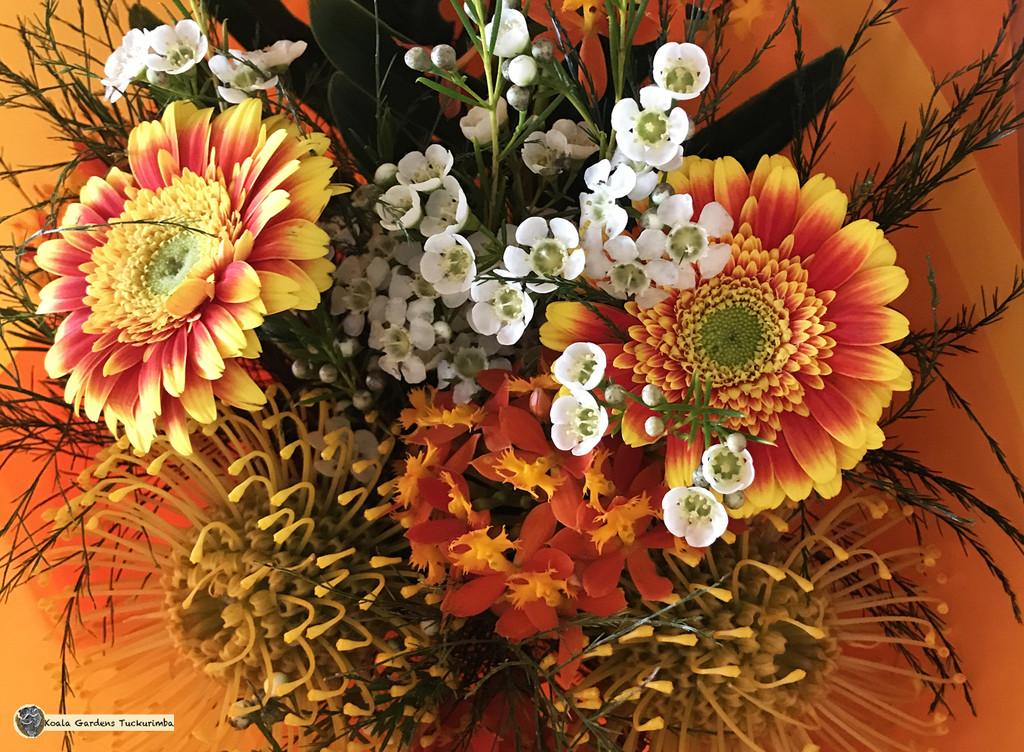 birthday flowers by koalagardens