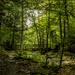 Spanning Kitchen Creek by skipt07