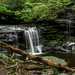 Ricketts Glen Waterfall by skipt07