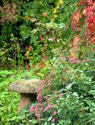 26th Sep 2017 - Autumn colour in the garden...
