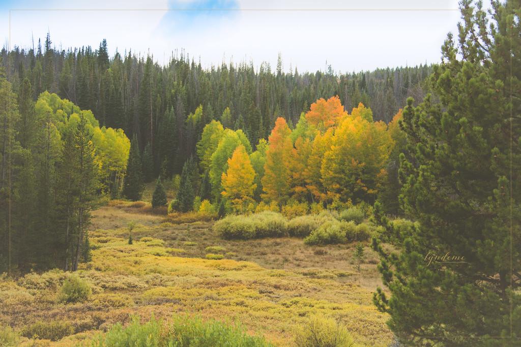Autumn Glory by lyndemc