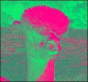 26th Sep 2017 - Wacko Alpaca