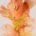 Gladiolus by haskar