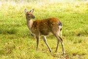 27th Sep 2017 - Bambi