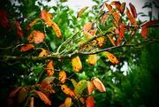 27th Sep 2017 - Autumn Colours