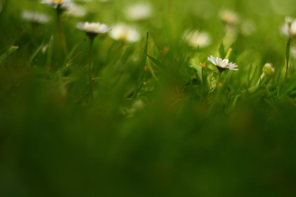 fresh as a daisy  by kali66