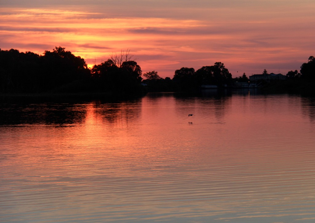 An evening on the Murray by landownunder