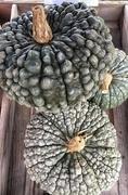 27th Sep 2017 - 3 pumpkins.