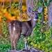 Bambi by lynnz