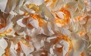 29th Sep 2017 - Daffodils