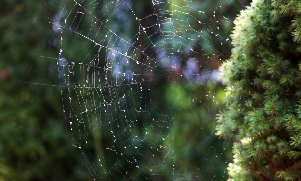 Spider web by mittens