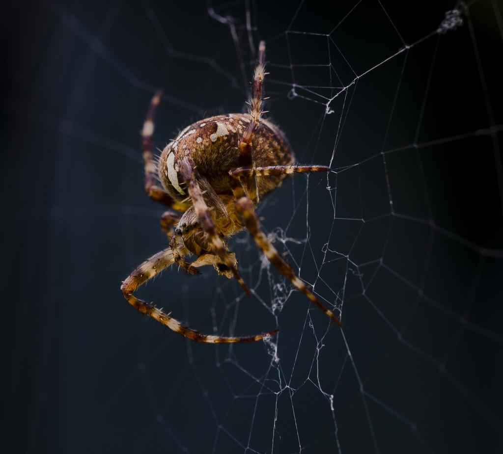 Spider In The Dark. by tonygig