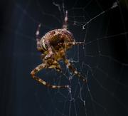 29th Sep 2017 - Spider In The Dark.