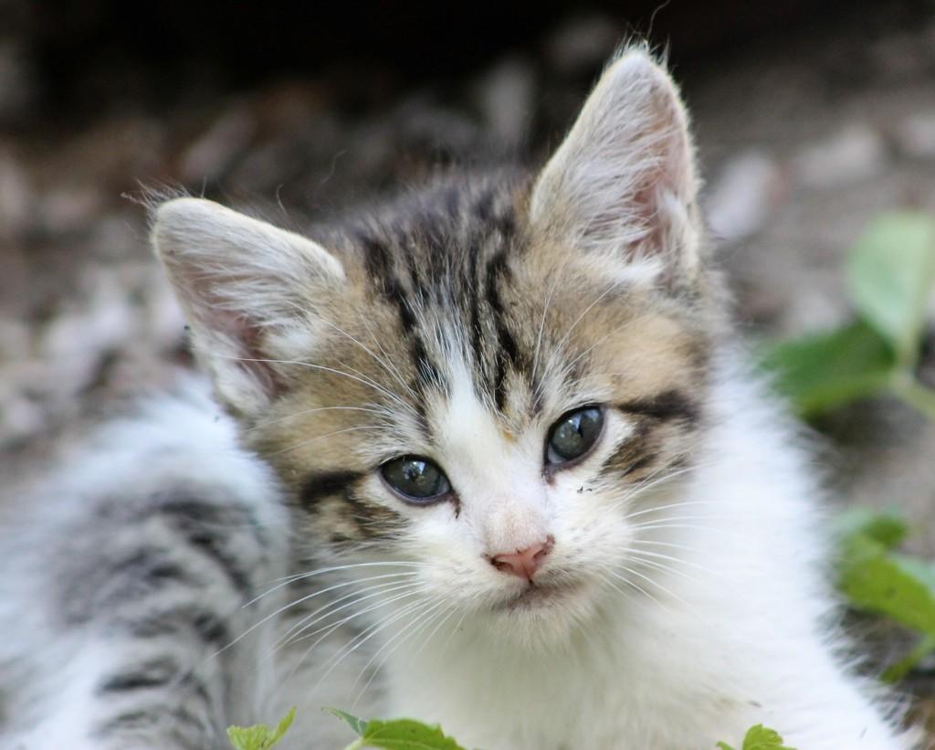 Soft Kitty, Warm Kitty by cjwhite
