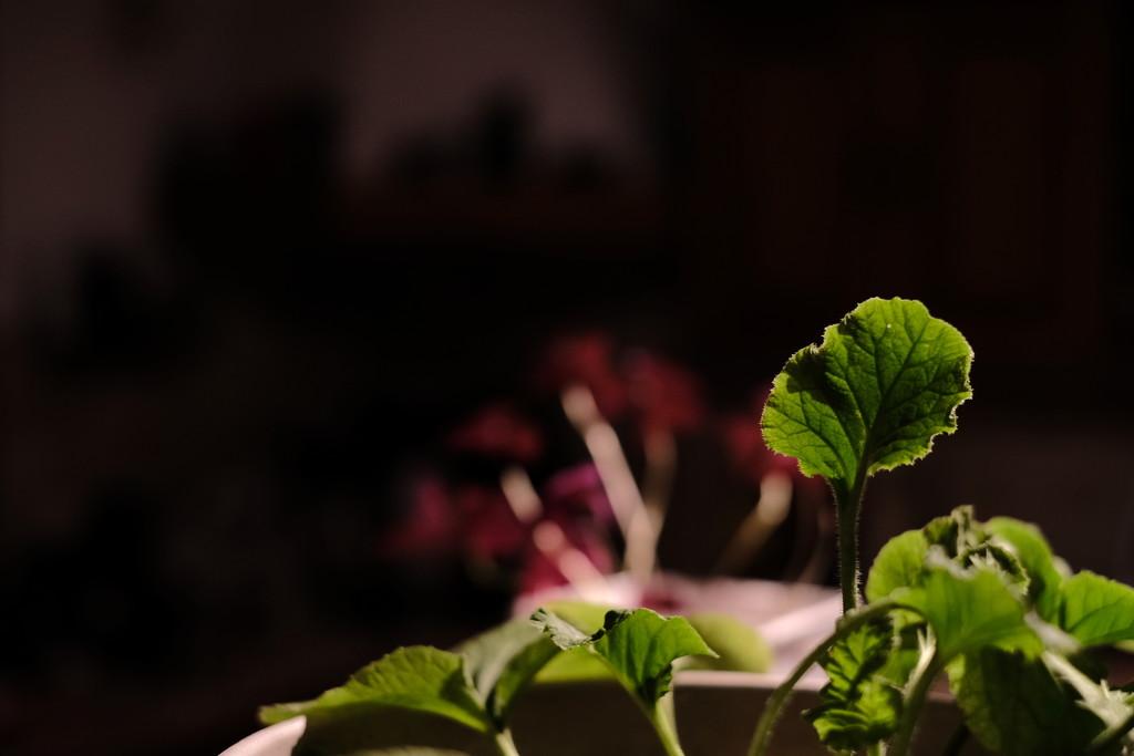 Kitchen Plants by vignouse