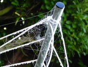 30th Sep 2017 - Oh, what a tangled web we weave .......
