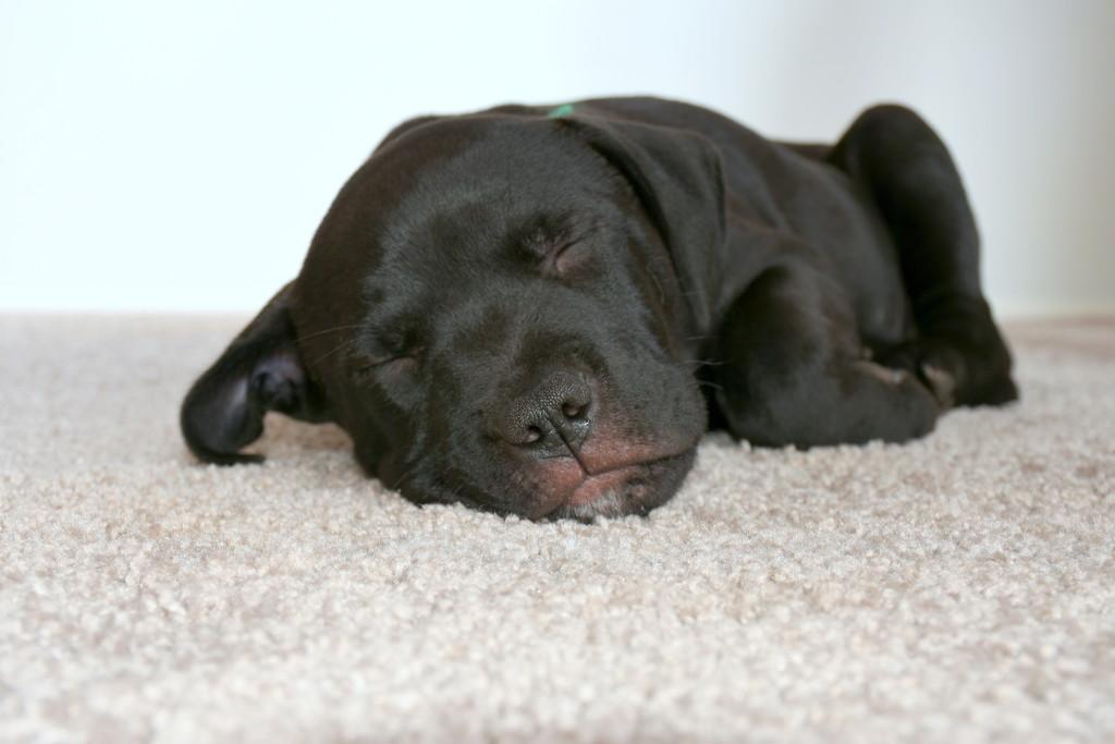 Pups - Still No Name by nickspicsnz