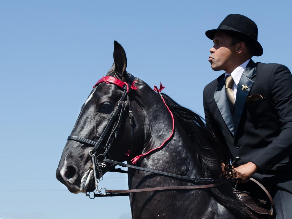 Horse Show by salza