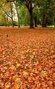 29th Sep 2017 - Carpet of leaves