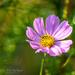 Blossom admist the foilage