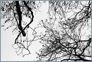 1st Oct 2017 - Jacaranda trees @ Roger Park