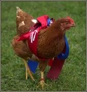 1st Oct 2017 - A great chicken