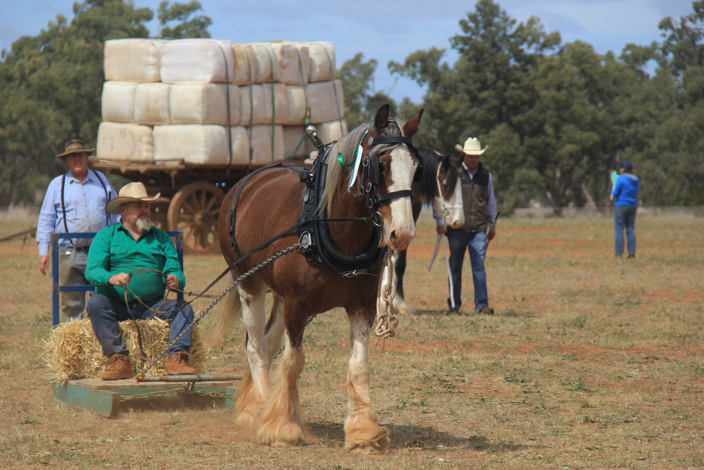 One horse power by landownunder