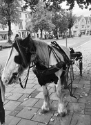 1st Oct 2017 - Horse and cart