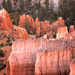 Foggy Morning at Bryce Hoodoos