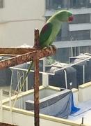 2nd Oct 2017 - The sweet talking parrot on my windowsill