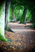 2nd Oct 2017 - Woodland Path