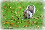 2nd Oct 2017 - What have you got there Squizzer?