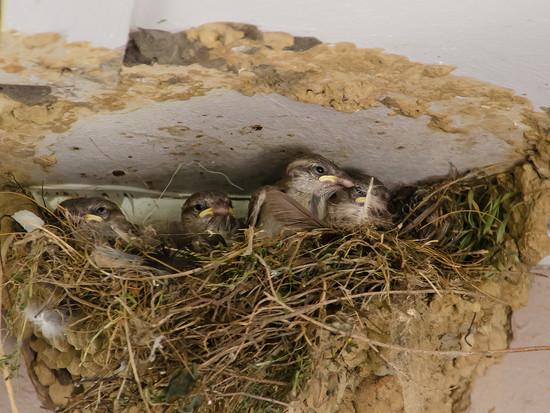 Sparrow Nest by salza