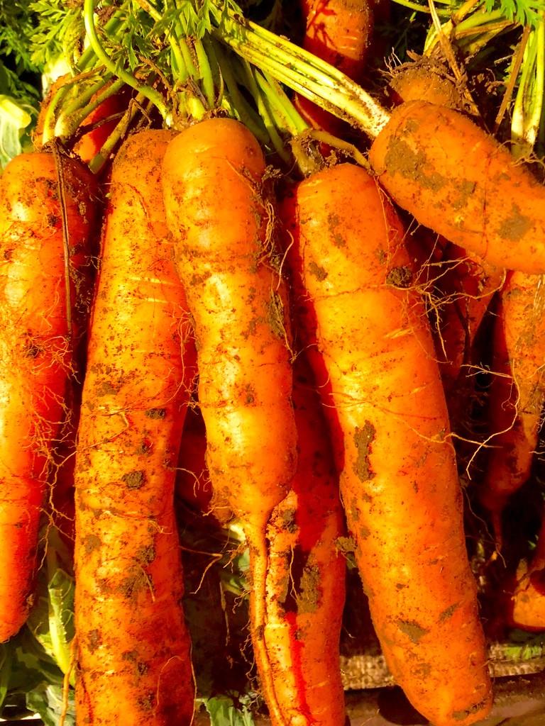 Carrots  by 365projectdrewpdavies