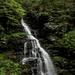 Erie Falls - Ricketts Glen State Park