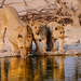 Lions at the waterhole by dkbarnett