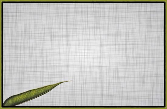 leaf by annied