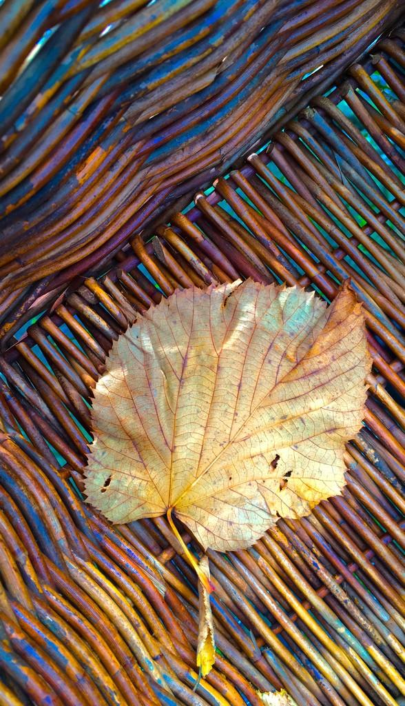 Don't leaf me  by stimuloog