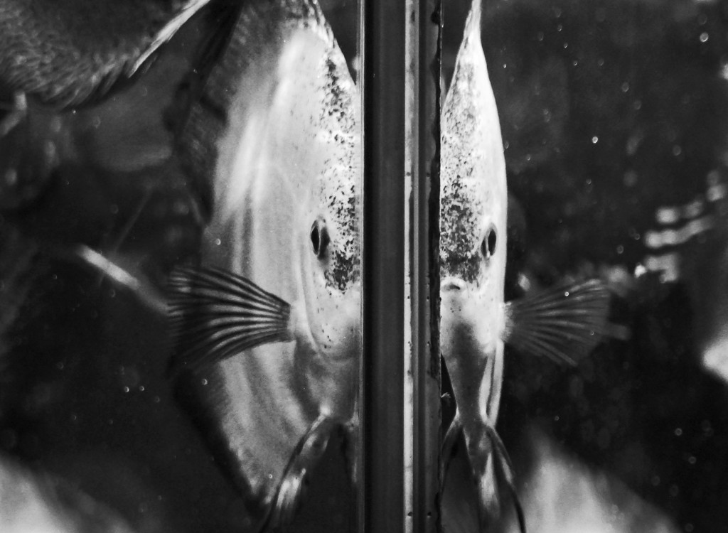 1fish, 2fish by amyk