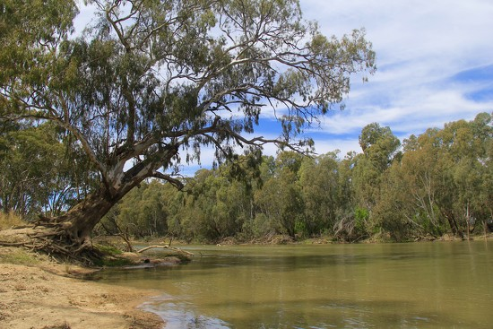 River Red Gum by landownunder