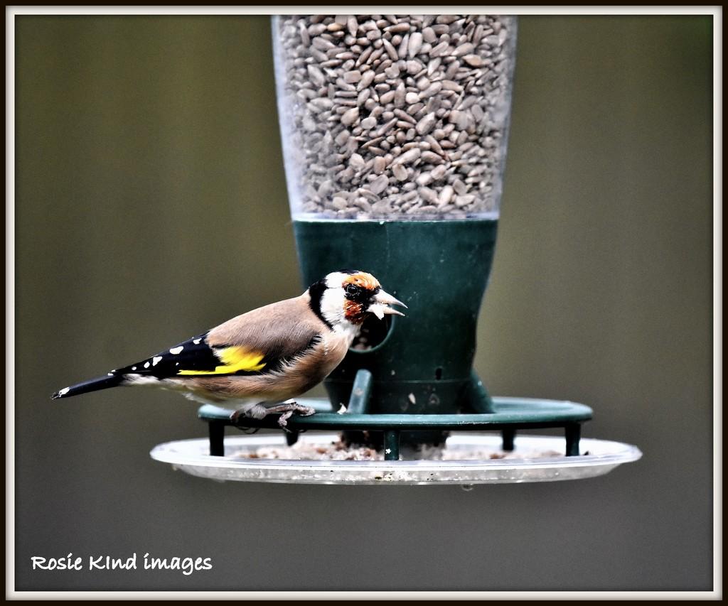 Goldfinch by rosiekind