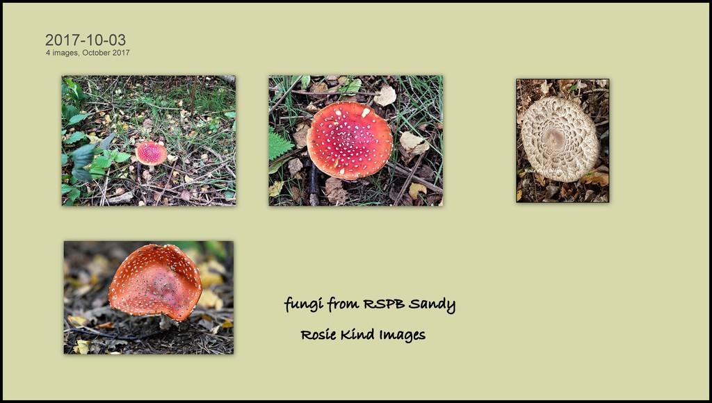 Fungi  by rosiekind