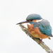 2017 10 04 - Kingfisher by pixiemac