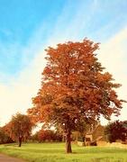4th Oct 2017 - still autumn...