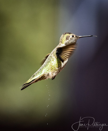 Hummer Peeing and Sticking Her Tongue Out At the Same Time by jgpittenger